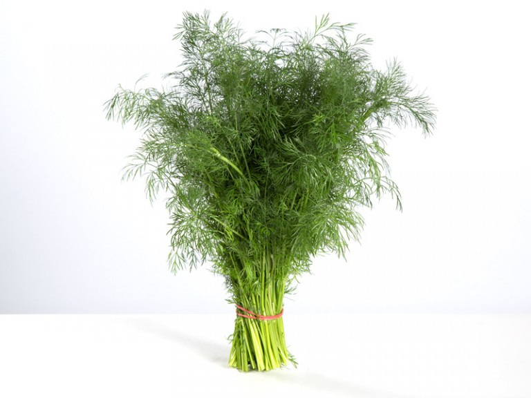 Dill, knippe